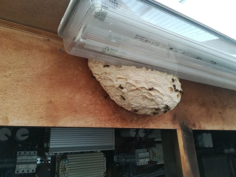 wespennest bij lichtbalk verwijderen